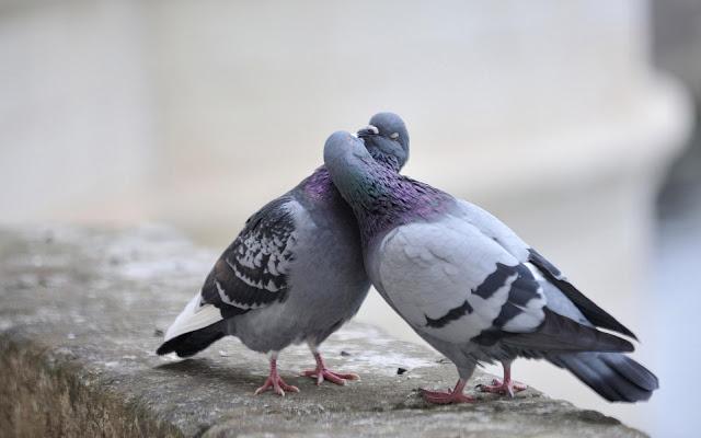 Έχεις μεγάλο πουλί